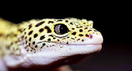 Anomalii ale pielii la reptile