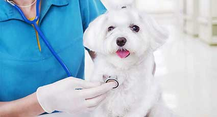 Cardiologie veterinara