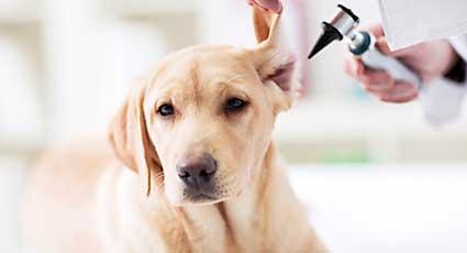 Deparazitare - proceduri veterinare