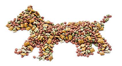 Ghid de alimentatie pentru caini la varsta adulta