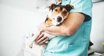 Eutanasie - proceduri veterinare