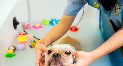 Igienizare corporala - proceduri veterinare