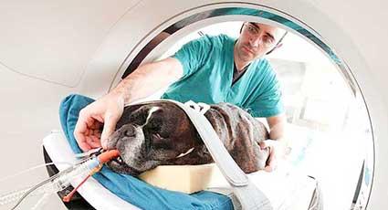 Imagistica veterinara