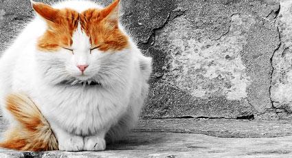 Cum ai grija de o pisica batrana