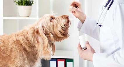 Medicina veterinara preventiva