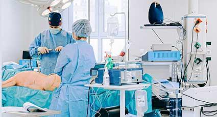 Proceduri laparoscopice la animalele de companie