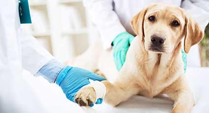 Protezare ortopedica - proceduri veterinare