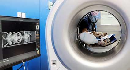 Radiologie veterinara
