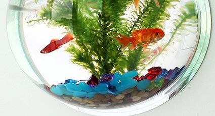 Sfaturi pentru un acvariu cu apa dulce