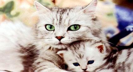 Sarcina la pisici