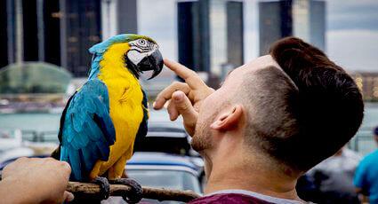 Vaccinarea papagalilor