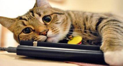 Indicii ca pisica este bolnava